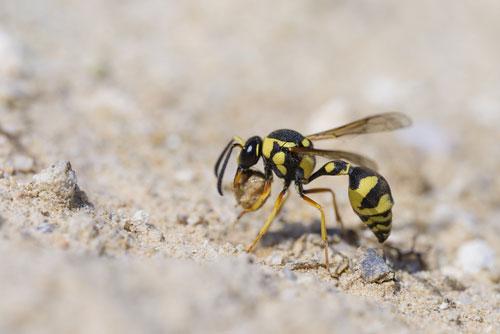87歳の女性 ハチに150か所刺され死亡
